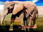 Water for Elephants by Mango84