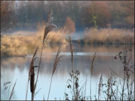 Beyond the reeds by Buble
