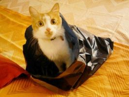 in the bag by Seadre