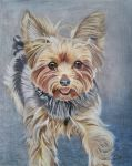 Yorkie by WindSong83