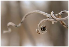 Spiral Twig by Zephania