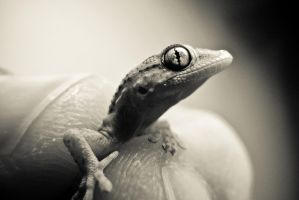 Little Lizard On My Hand.. by Youcef07