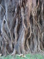roots3 by DivsM-stock