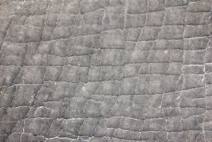 African Elephant - Skin and Leather Background by LivingWild