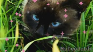 A Siamese Cat by MsDeadable