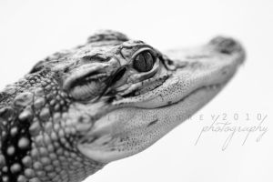 Alligator Baby by Azrhia