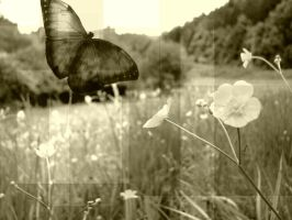 Where is my butterfly? by Mitsuu-was-here