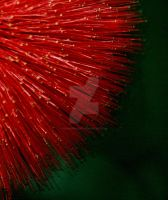 Fuzzy Red Flower by eskimoblueboy