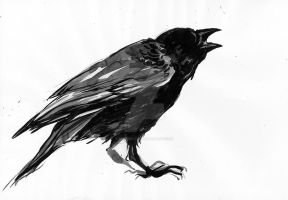 crow ink sketch by reminisense