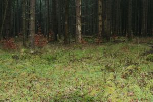 Forest Stock 039 by Malleni-Stock
