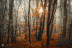 love makes the difference... by ildiko-neer