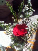 red rose and white flowers by idielastyr