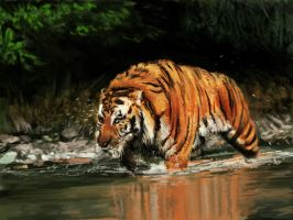 Tiger by Afternoon63
