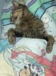 Happy Kitty Sleepy Kitty Pur Pur Pur by JZLobo