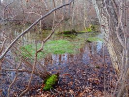Mossy Greens by SumYungGa1