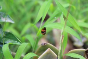 Lady Bug Make out 1 by rodericklal