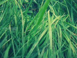 Sunday Morning Dew by Vladiftimescu