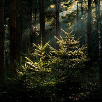 Rays of light by SEKArt