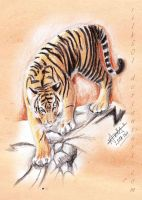 EAP Aug : Tiger by silk501