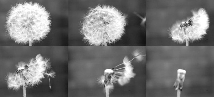 blow by Juliusius
