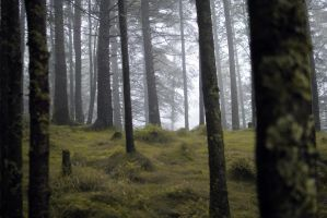 Misty Forest Stock III by Angband