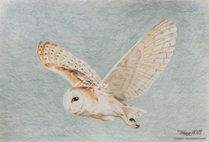 Barn Owl Flying by 5Happy5