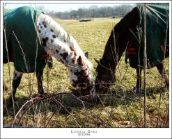 Horses in Indiana by renderedsublime