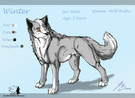 Winter  Ref.Sheet by Canis-Sum