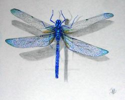 blue dragonfly by winstonscreator
