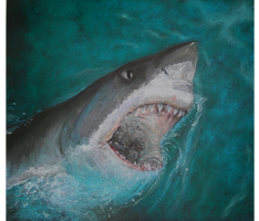 Great white shark by BLACKNIGHTINGALE81