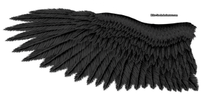 Black Eagle Wing by K1ku-Stock