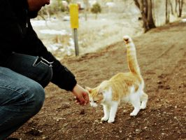 On that day we met the cat. by Mollycoddled
