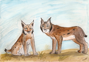 Two iberian lynxes by Domisea