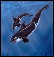 Orcas by AmberSea
