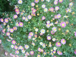 I'd sleep in a bed of daisies. by WongZixin