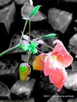 Just a Flower by penetrating-surfaces