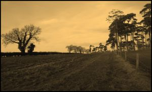 Distant Trees by Lightfoot11