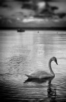 Swan, Concentric by morphine9L