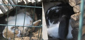 My Rabbits by Tomoffell
