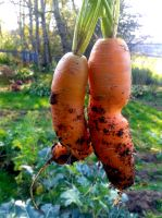 You Dirty Carrots! by Naryndel
