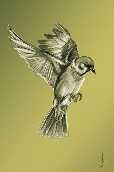 7/365 - sparrow by h1fey