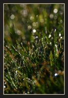 The dew on earth. by Dan52T
