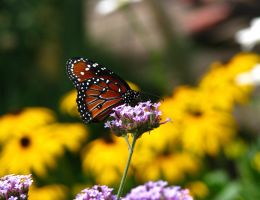 Butterfly on Flower by AudraMBlackburnsArt