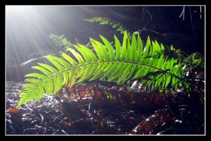 photosynthesis 2 by d-evans