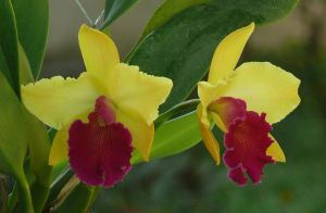 My Orchid31 by Otoff