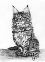 Maine Coon Kitten by CynthT