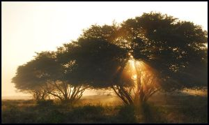 Lightthought 461 by lightthinker
