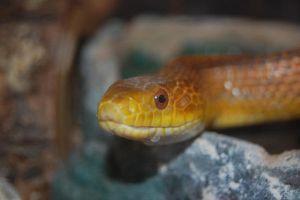 Snake 2 by adamlonsdale