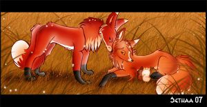 Foxes In Love by Sethaa