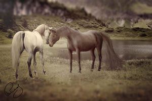 horse by pure52hart